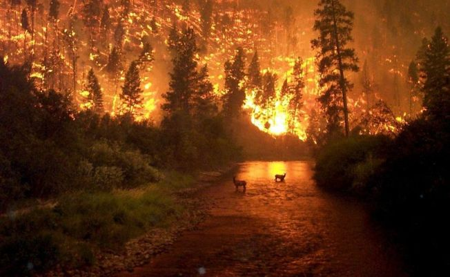 Deadliest Forest Fires of All Time